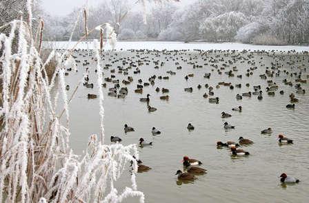 Week-end découverte avec escapade au Parc des Oiseaux, à Villefranche-Sur-Saône