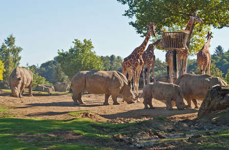 Découverte du Zoo de Beauval en famille