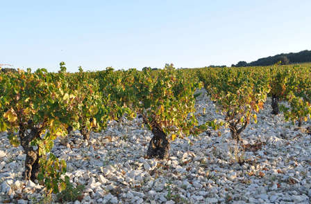 Week-end découvert avec dégustation de vin aux portes d'Avignon