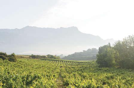 Décourverte des vins du Languedoc et week-end de charme à Collioure