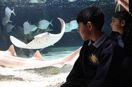 Week-end en famille près de Disneyland Paris® avec entrée à l'Aquarium Sea Life