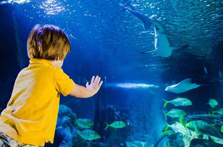 Visite de l'aquarium Sea Life en famille
