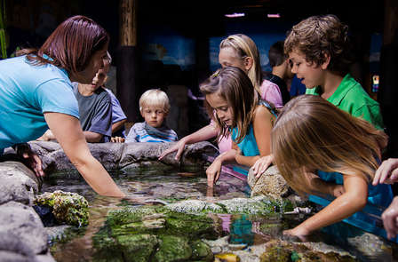 Week-end en famille avec entrée à l'Aquarium Sea Life proche de Disneyland®  Paris