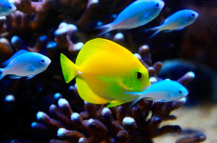 Escapade découverte près de la mer avec dîner et entrées à l'aquarium de St-Malo (2 nuits)