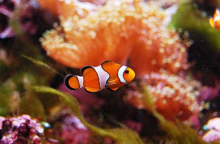 Week-end avec entrée au Grand Aquarium de St-Malo, accueil régional inclus !