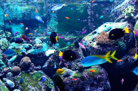 Week-end découverte de la cité corsaire avec entrée au Grand Aquarium de St-Malo