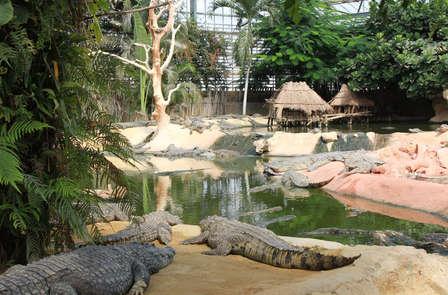 Weekend in famiglia con visita alla Ferme aux Crocodiles, nel cuore di Montélimar