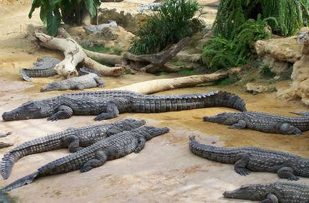 Week-end en famille avec découverte de la Ferme aux Crocodiles, en chambre supérieure dans un manoir