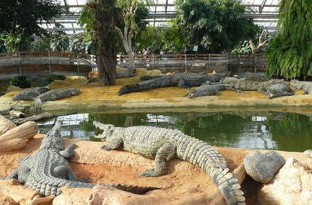 Week-end découverte avec escapade à la Ferme aux Crocodiles et nuit au château, près d'Orange