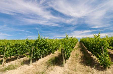 Escapada enológica con cata, visita a Bodega y picnic en Castellón