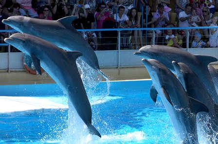 Rencontrez les dauphins et les otaries à Marineland