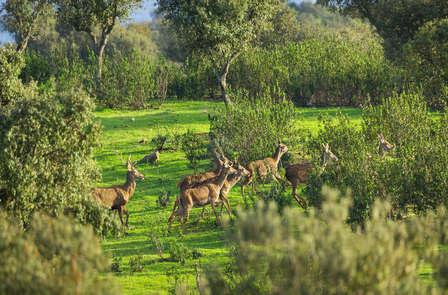 Aventura & lujo en plena dehesa extremeña con safari fotográfico en 4x4