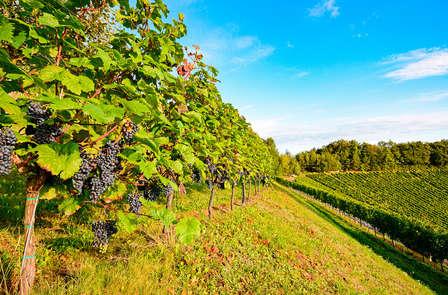 Alla scoperta di vini, vigne e cantine della Rioja