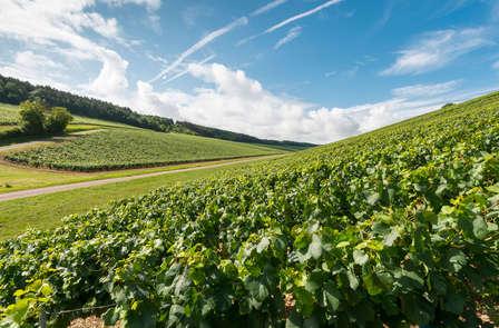 Escapada Relax con visita Bodega en La Rioja