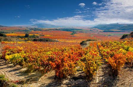Proef de wijnen uit Rioja (vanaf 2 nachten)