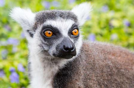 Een dagje dierenpark Pairi Daiza en heerlijk verblijf in Bergen met wellness