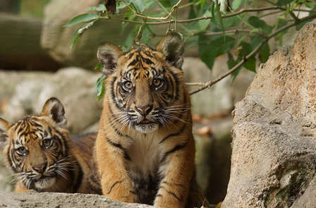 Week-end à la découverte du ZooParc de Beauval