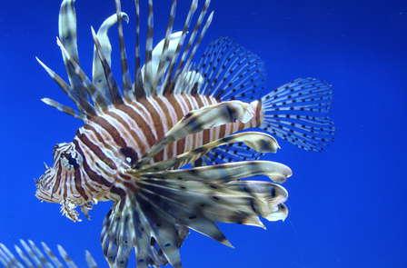 Week-end à Dinard avec entrée à l'Aquarium de St Malo et panier breton !