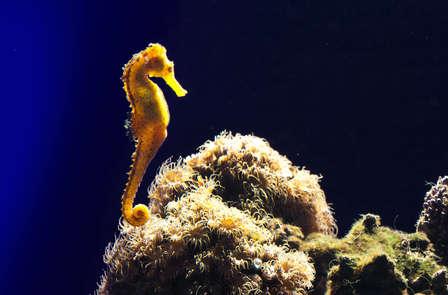 Découvrez Saint-Malo et son grand aquarium