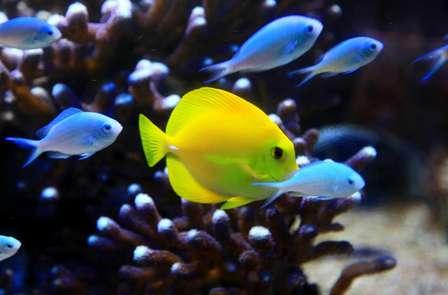 Week-end à La Rochelle avec entrées à l'aquarium de La Rochelle