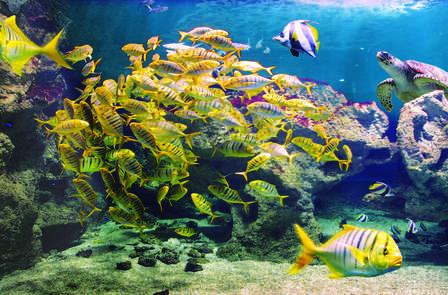 Week-end avec entrées à l'aquarium de La Rochelle