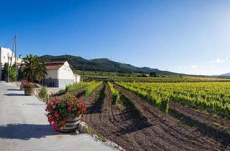 Naturaleza y viticultura en las montañas de Prades