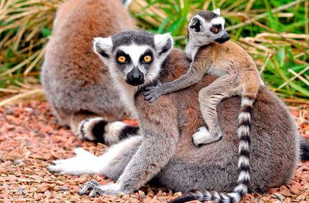 Magische avonturen in dierentuin Pairi Daiza te Wallonië
