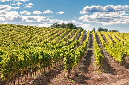 Weekend en Alsace et dégustation de vin