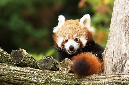Week-end découverte avec entrée au Zoo Parc de Beauval (à partir de 2 nuits)