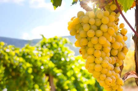 Escapada con visita a Bodega de vinos y cata en Vilafamés (Desde 2 noches)