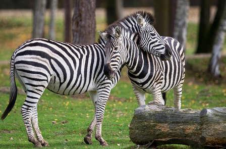 Un safari près de Paris au zoo de Thoiry