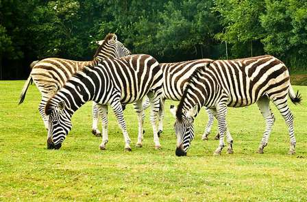 Week-end près de Nantes avec entrées pour le Parc animalier la Planète Sauvage