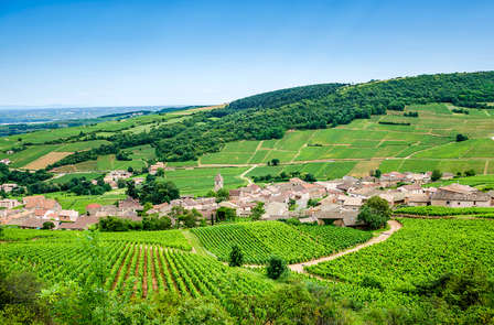 Dégustation de vins aux portes de Beaune