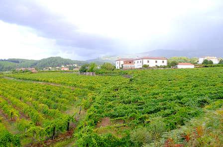 Visita a bodega con degustación en el norte de Portugal