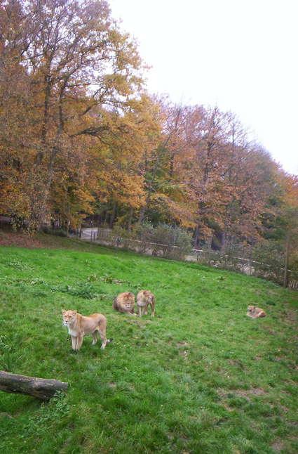 Parc zoologique de Lisieux