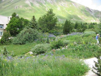Jardin botanique du col du Lautaret