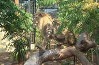 Parc zoologique du Cap Ferrat -