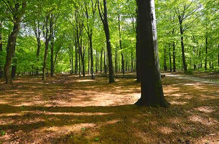 Luxe vijfsterren verblijf in de Veluwse natuur