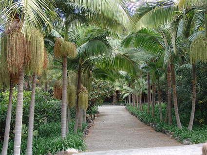 Jardín Botánico de la Marquesa de Arucas