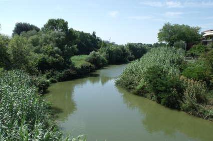 Foglia (fleuve)