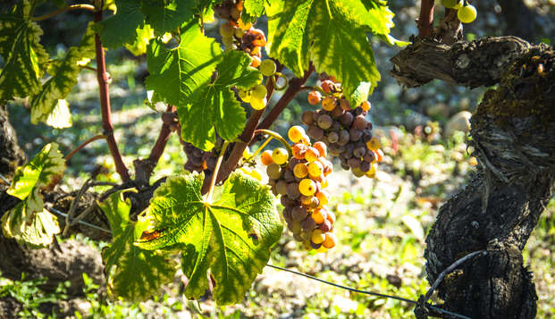 Week-end oenologie et dégustation à proximité de Bordeaux