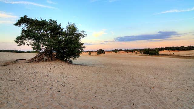 Minivakantie aan de bosrand van de Veluwe (vanaf 2 nachten)