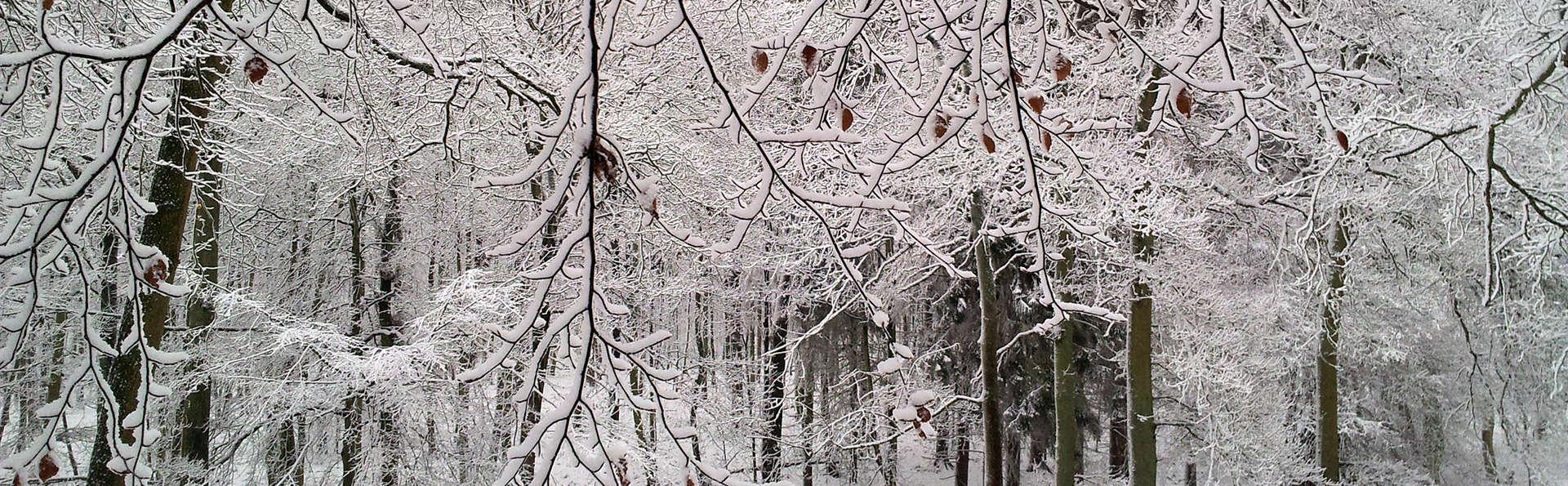 Escapade hivernale au coeur de la forêt de Soignes