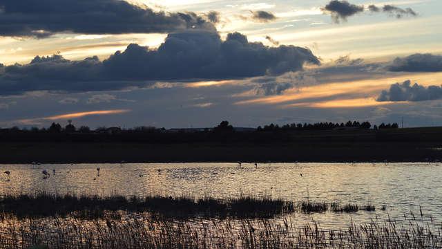 Escapada en La Mancha más auténtica con ruta de avistamiento de las aves locales