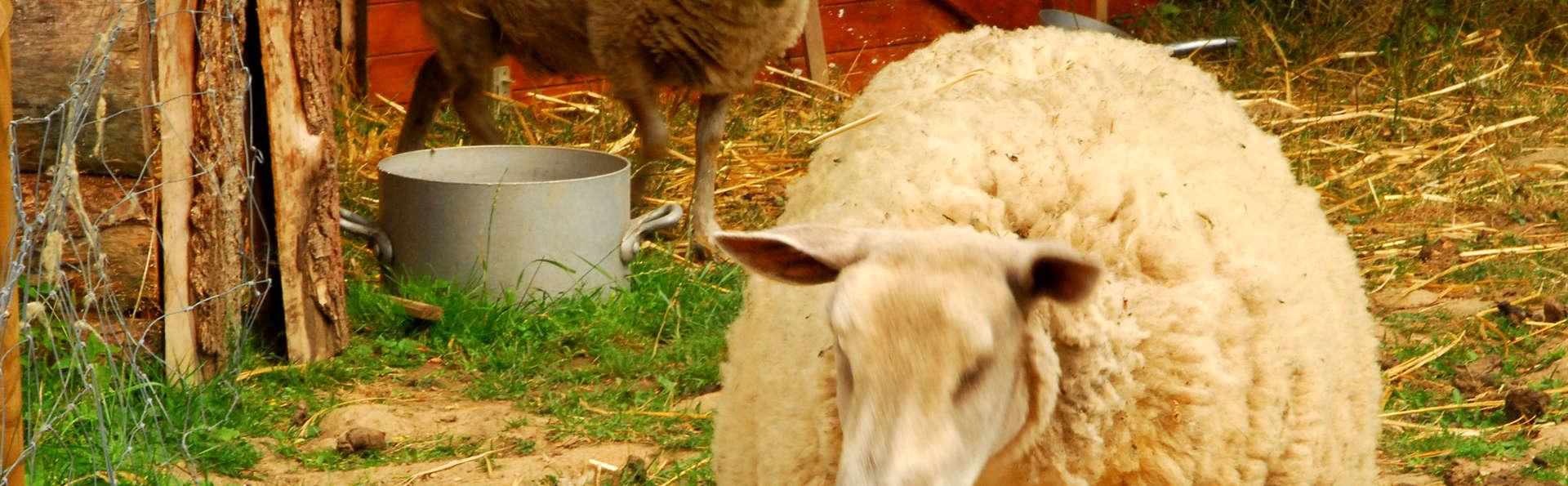 Village Toue du Domaine des Demoiselles - Edit_Animals.jpg