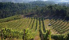 Bezoek aan de wijnkelders Terras Gauda