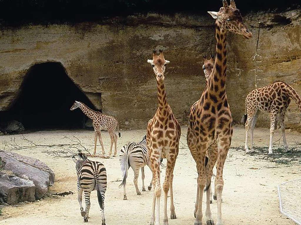Escapade au Zoo du Bioparc près de Saumur 3*