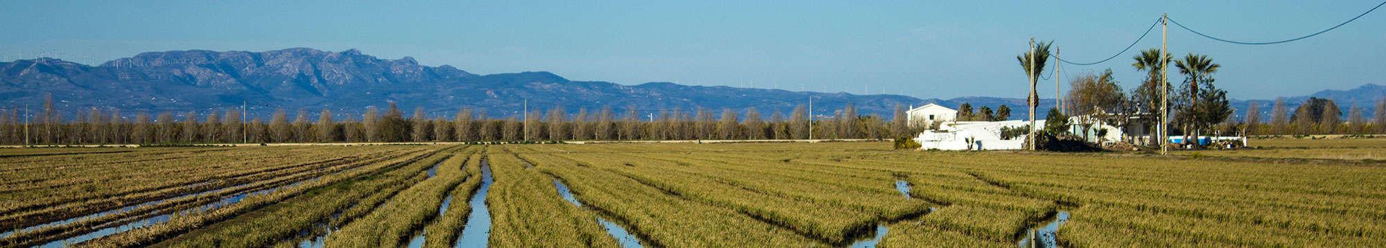Escapadas fin de semana en Delta del Ebro