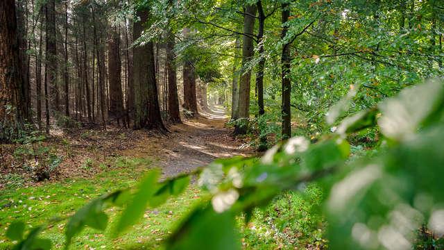 Explorez l'environnement naturel de Zutphen à vélo