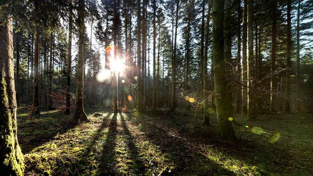 Week-end en cottage premium jusqu'à 4 personnes au Center Parcs Domaine des Trois Forêts (7 nuits)
